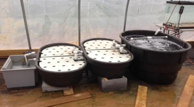Aquaponics Our Edible Suburb