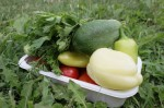 Fresh-Garden-Vegetables_Natural__IMG_5191-580x386